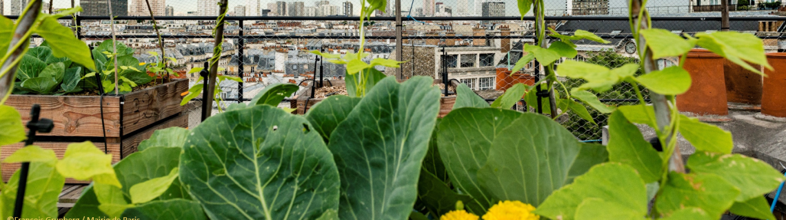 Innovations pour une agriculture urbaine durable