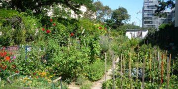 L'Université Gustave Eiffel, partenaire de AllEnvi Solutions sur l'agriculture urbaine